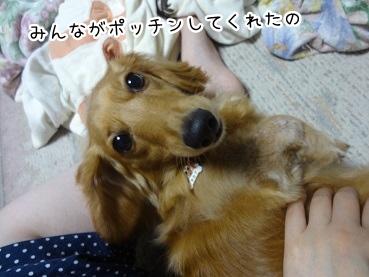 kinako2778.jpg
