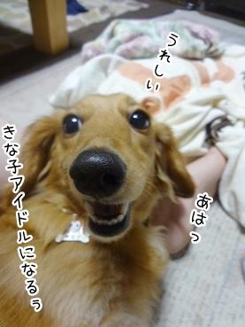 kinako2779.jpg
