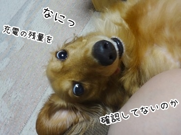 kinako2829.jpg