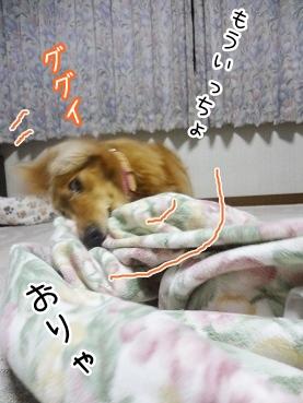 kinako2836.jpg