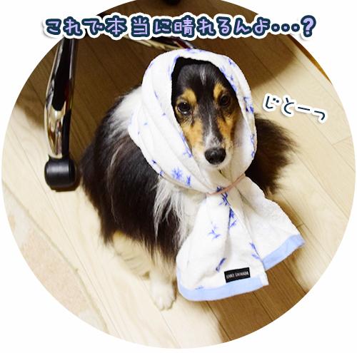 DSC_0040_201507070524084fa.jpg