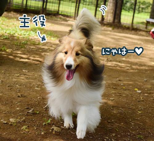 DSC_0105_2015070100112111d.jpg