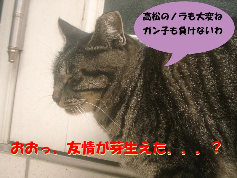 高松通信4
