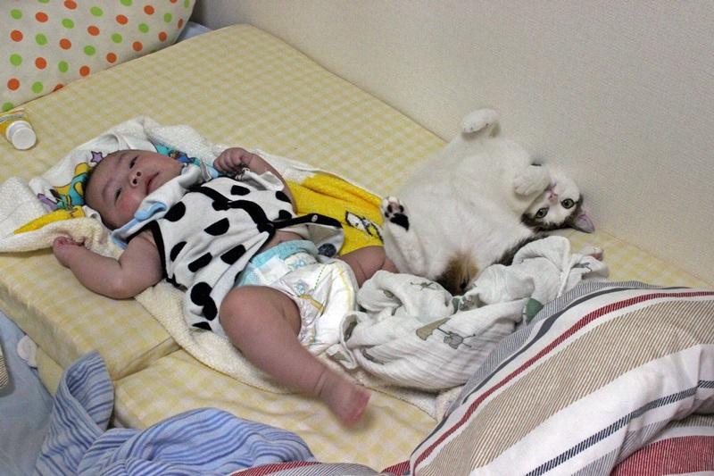 nobunobu12300234.jpg