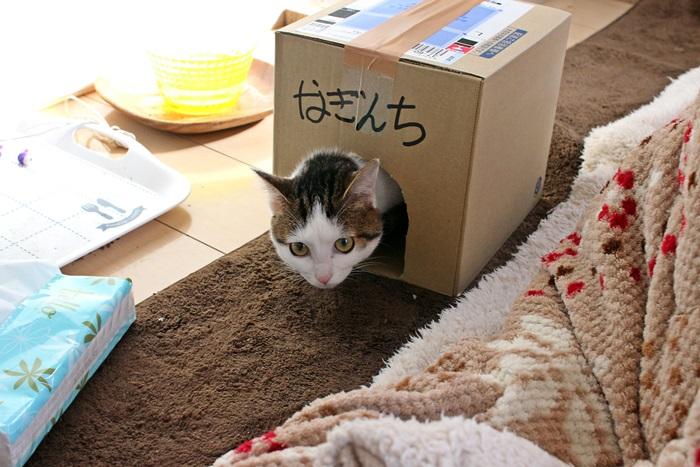 nobunobu1300179.jpg