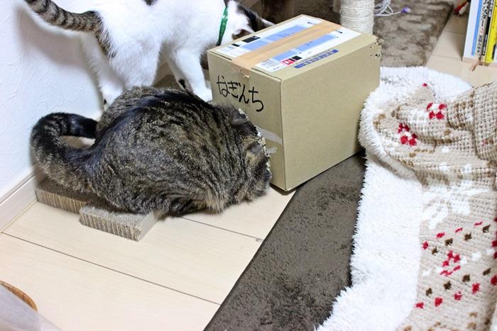 nobunobu1300185.jpg