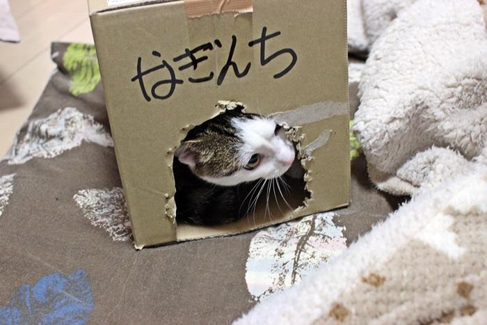 nobunobu1300187.jpg