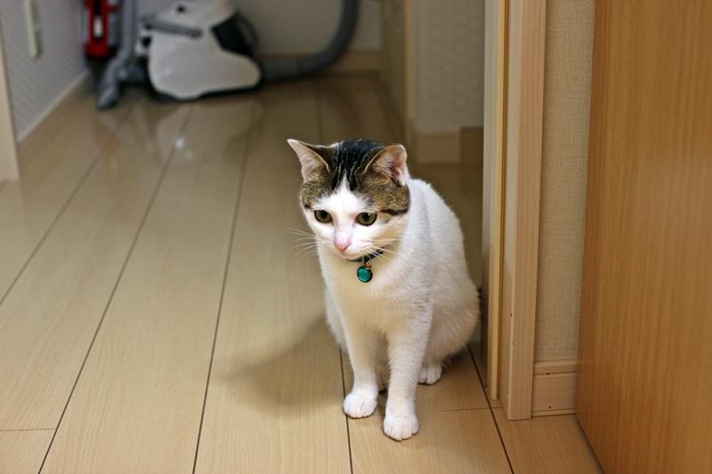 nobunobu1300622.jpg