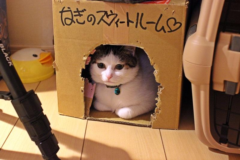 nobunobu1300882.jpg