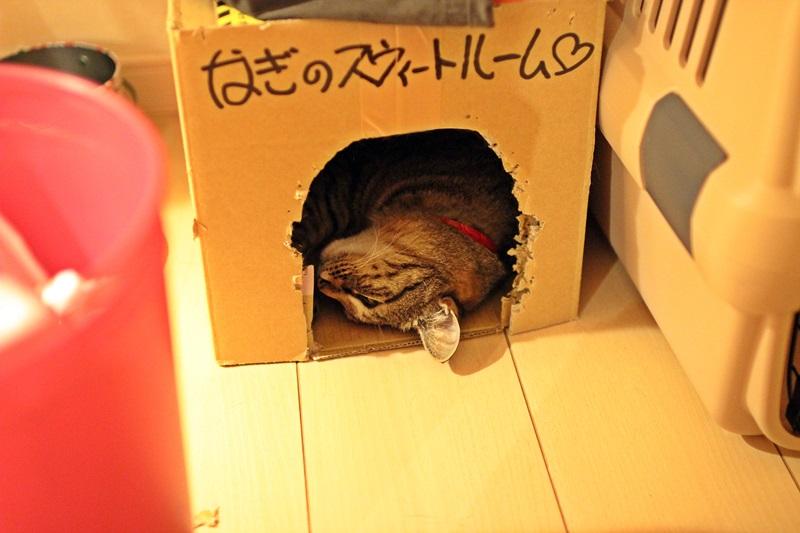 nobunobu1300918.jpg