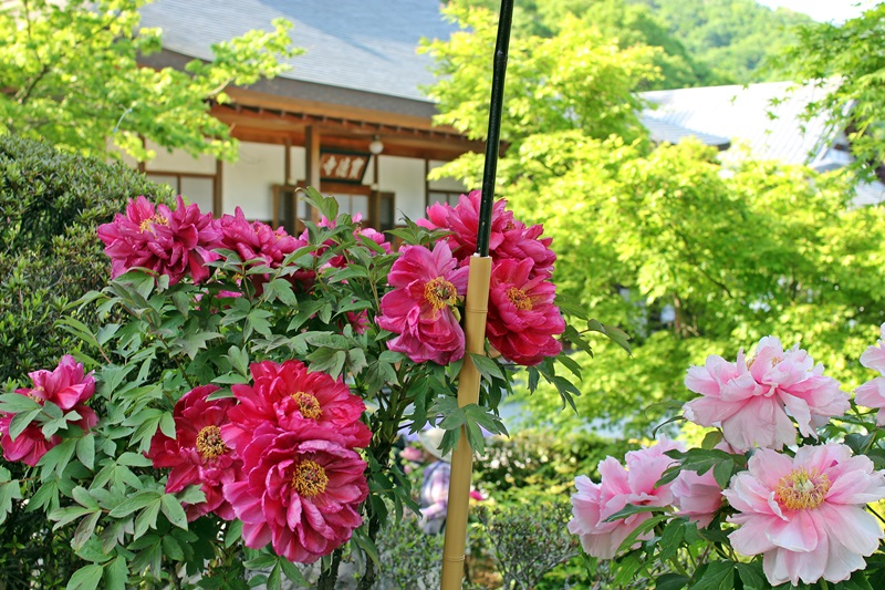 nobunobu1300949.jpg
