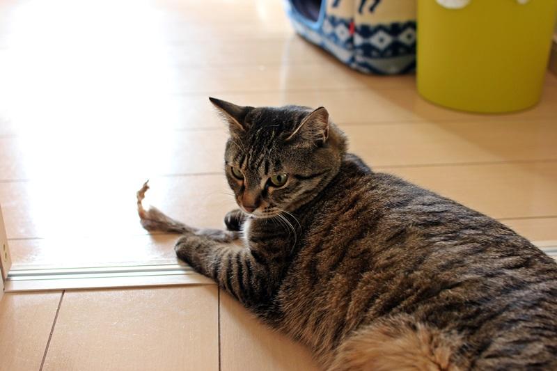 nobunobu1300950.jpg