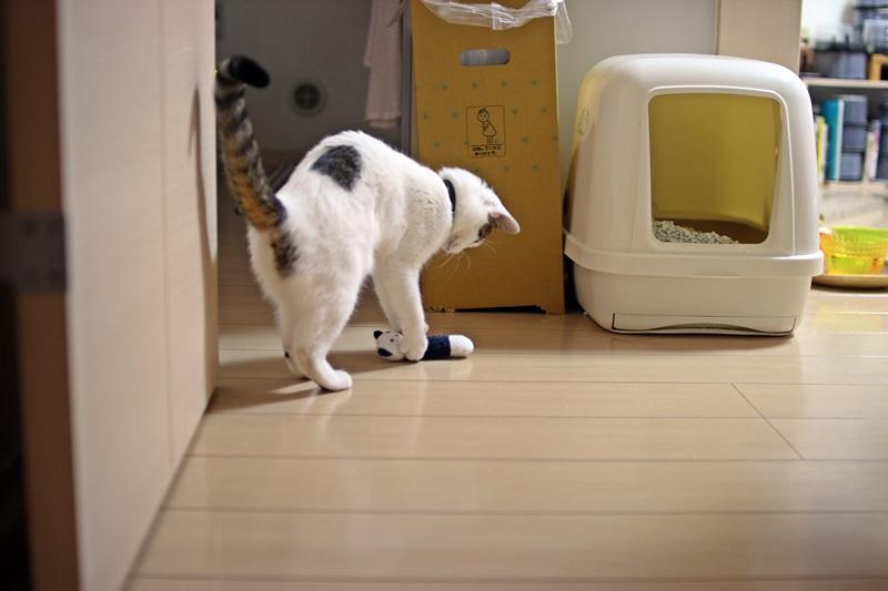 nobunobu1300992.jpg