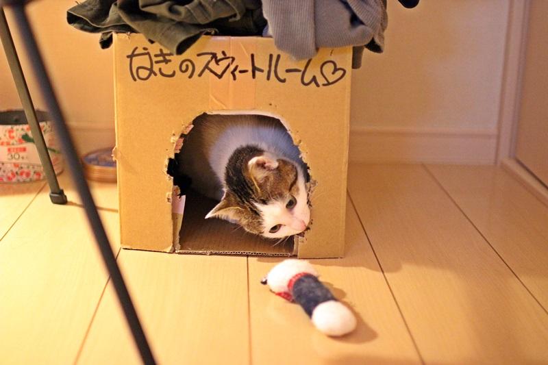 nobunobu1300993.jpg