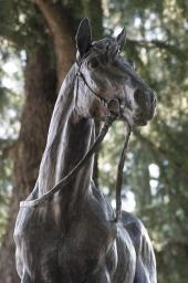 トキノミノルもダービー馬