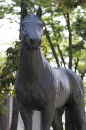 ウオッカもダービー馬