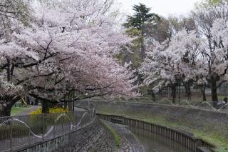 善福寺川緑地へ