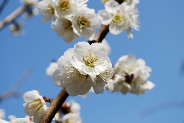 9013梅開花