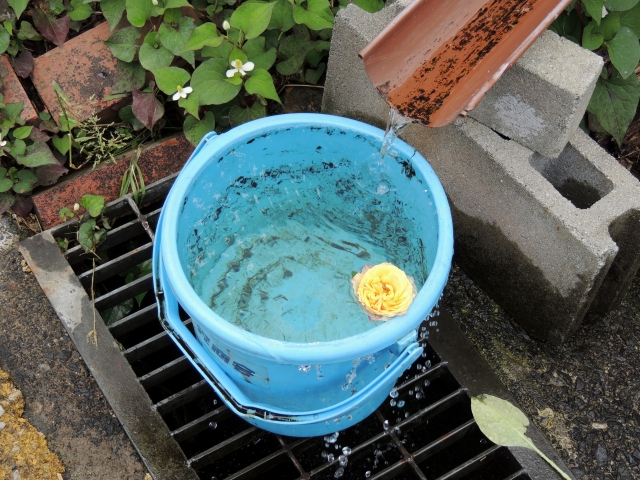 N6124バケツの水