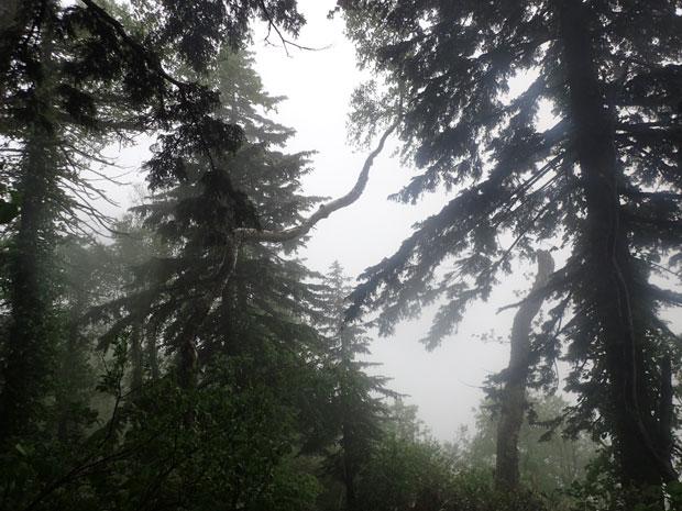 P6050118目印の木w
