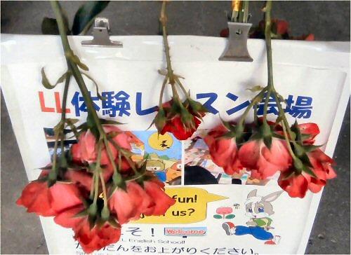 01 500 20150604 薔薇のポプリづくり