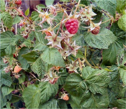 09 500 20150616 raspberry01