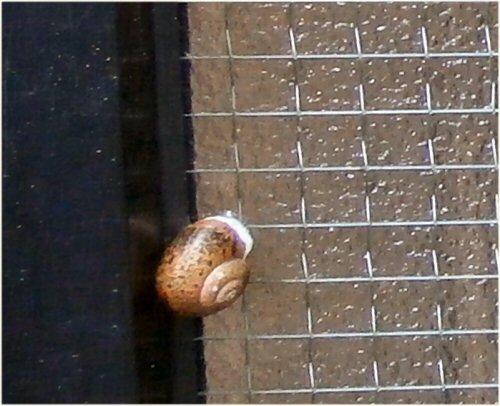 04 500 20150620 snail waits rain