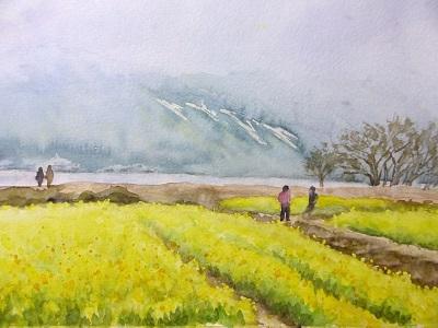 琵琶湖の菜の花