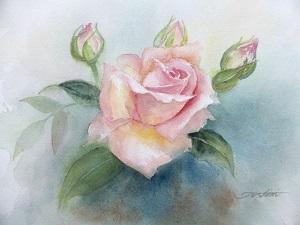 芦屋の薔薇