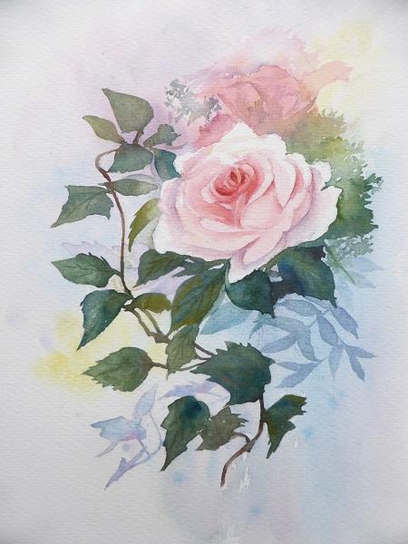 陽子先生のバラ