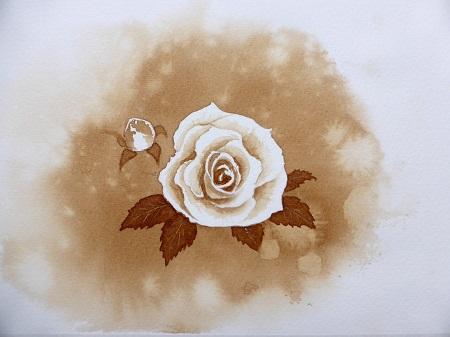 コーヒーのバラ