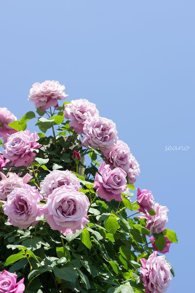 DSC05168-2.jpg