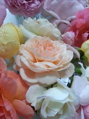 20150701のバラ05_R
