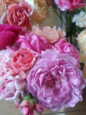 20150703かわいいバラ達02_R