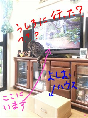 20150703よしお03_R