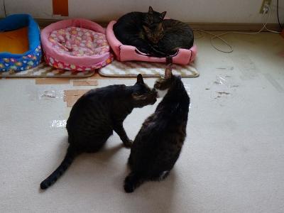 手前はミミちゃんとリリちゃん 後ろはぺぺちゃんとチビ君DSC01158