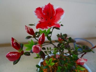 赤富士DSC01609