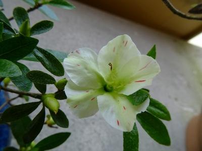 緑花の泉DSC01610