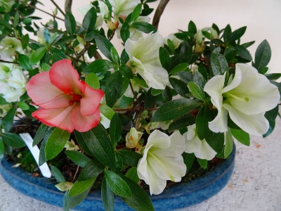 緑花の泉(Ryokukanoizumi)DSC01683