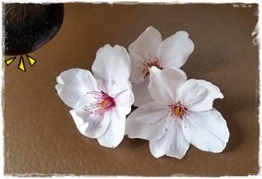 2015- 桜☆