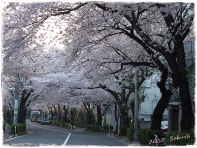 2015 M桜