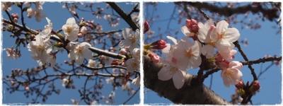 2015春ー①-tile