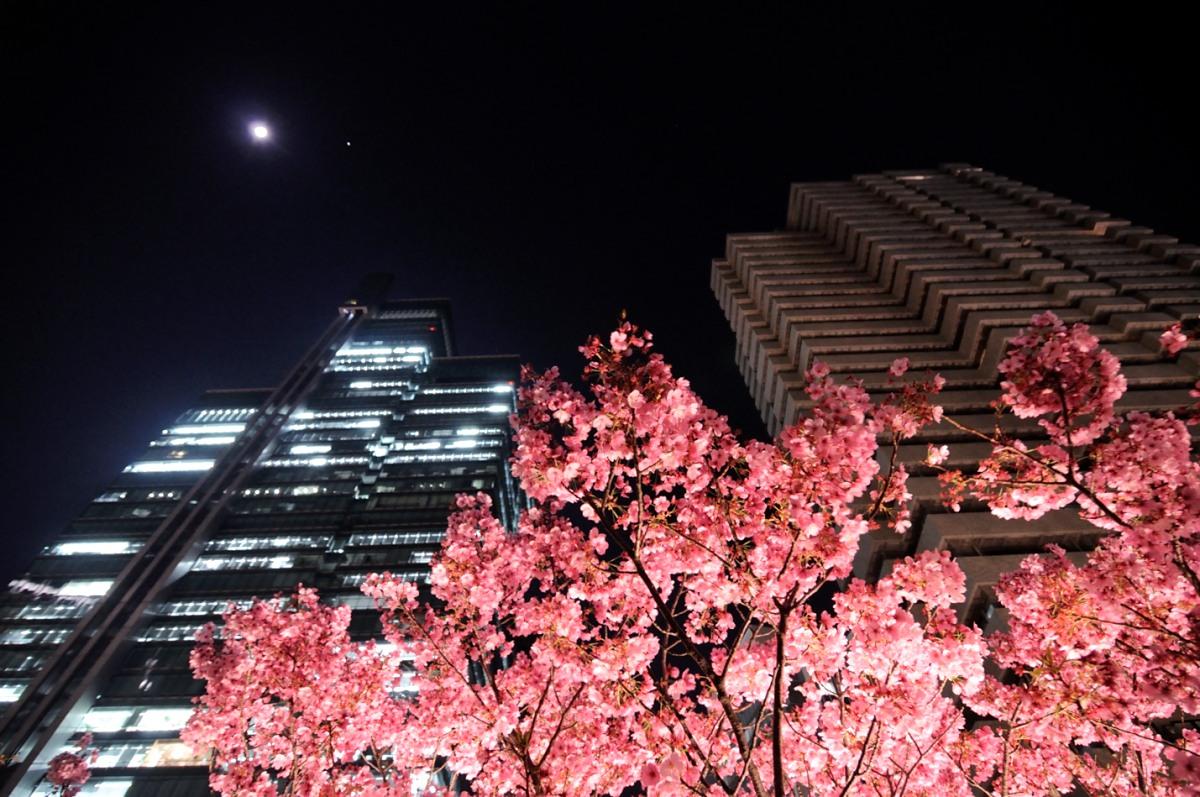 アークヒルズ桜__02