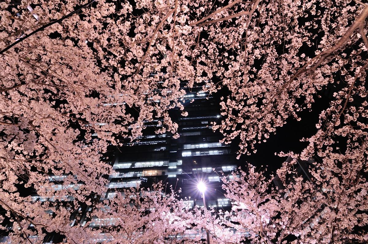 アークヒルズ桜__03