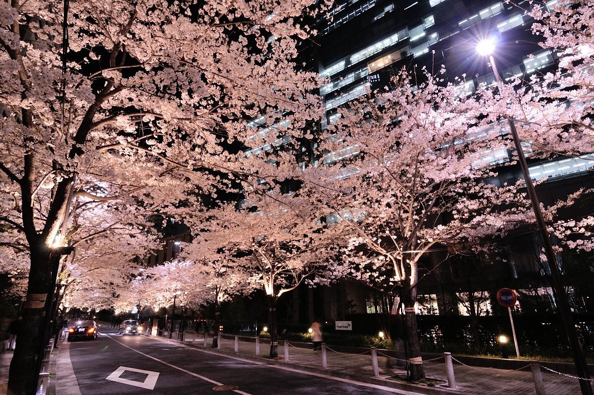 アークヒルズ桜__04