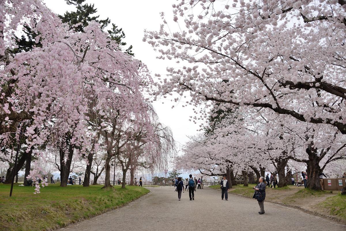 弘前公園__04