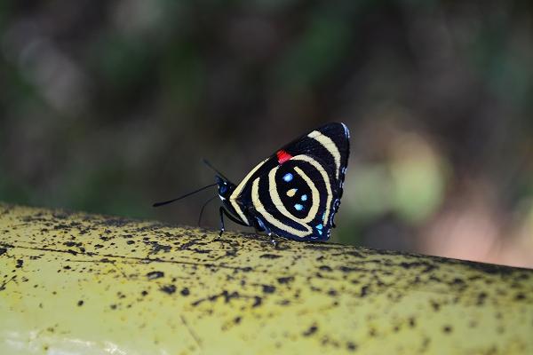 brasil iguasu (8)