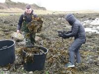 seaweedharvest