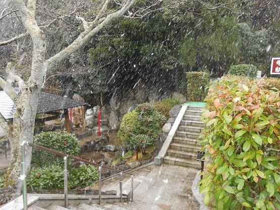 雪が降ってます①
