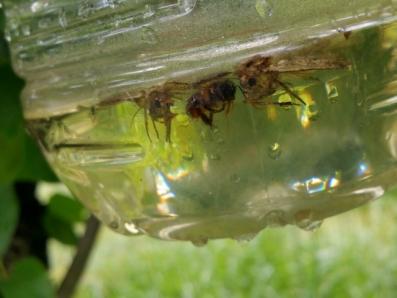 ペットボトルで補殺した虫